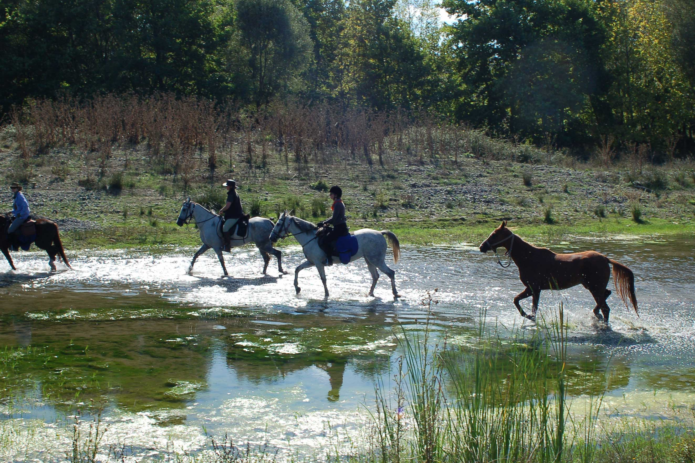 People riding horses through a stream